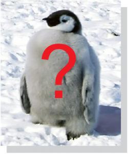 Posicionamiento organico y el pinguino de google